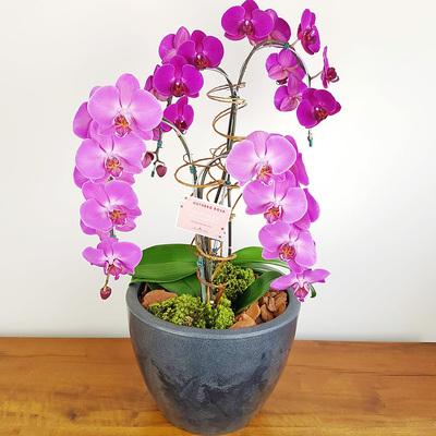 assinatura-orquidea-12.jpg