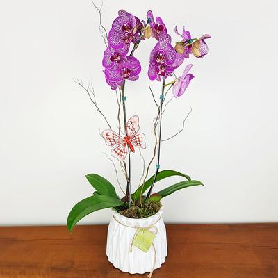 assinatura-orquidea-14.jpg