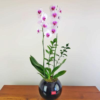 assinatura-orquidea-17.jpg
