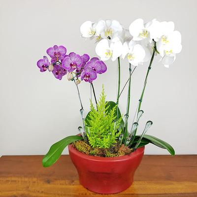 assinatura-orquidea-18.jpg