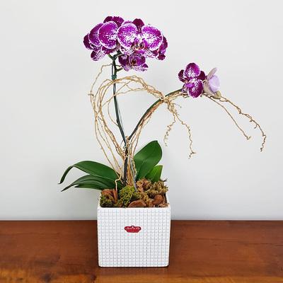 assinatura-orquidea-19.jpg