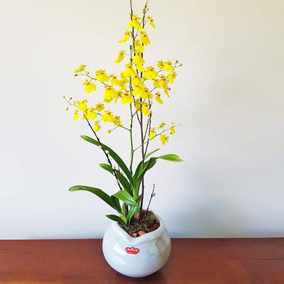assinatura-orquidea-20.jpg